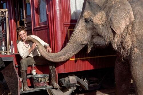 DE L'EAU POUR LES ELEPHANTS de Francis Lawrence, robert pattison, reese whiterspoon, christoph waltz, cinéma