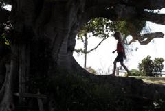 l-arbre-de-julie-bertuccelli-4574428atogi.jpg